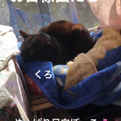 空/猫/めん/にこ/黒猫/くろ/... おはようございます。良いお天気になりまし…(5枚目)