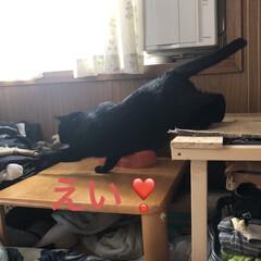 にこ/黒猫/お昼ご飯 お昼ご飯は暑いからぶっかけそうめん。 あ…(3枚目)