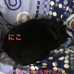 空/猫/猫飼いのしあわせ/くろ/にこ/黒猫/... おはようございます。 良いお天気です。し…(7枚目)