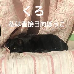 空/朝ご飯/にこ/くろ/黒猫/めん/... 猫たちに朝ご飯したらなんとなく耳鳴りが酷…(8枚目)