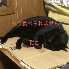 黒猫/くろ/にこ/猫/めん 夕ご飯食べたら寝室で寝るのがこの頃の定番…(3枚目)