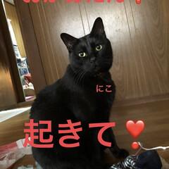 朝ご飯/めん/猫/にこ/くろ/黒猫 おはようございます☀ 良いお天気です。朝…(1枚目)