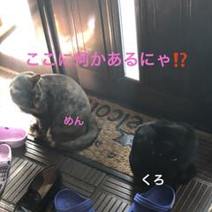 空/にこ/くろ/黒猫/猫/めん おはようございます☀ 良いお天気です。今…(4枚目)