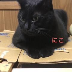 めん/猫/にこ/くろ/黒猫 こんばんはです。今日も一日お疲れ様です。…(3枚目)