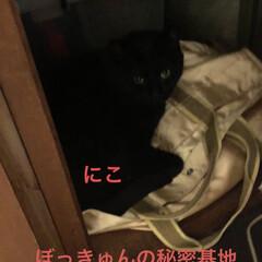 めん/猫/くろ/にこ/黒猫 のんびり休日。猫さまたちもまったり過ごし…(4枚目)