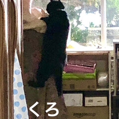 親子/黒猫/くろ/めん/猫 アクティブなくろとめん。楽しくて仕方ない…(4枚目)