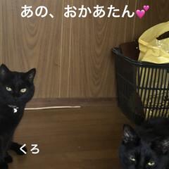 猫/めん/黒猫/くろ/にこ 夕方の猫さまたち。お腹が空くと私のそばに…(1枚目)