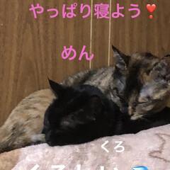 晩ご飯/黒猫/くろ/にこ/猫/めん 今日も一日お疲れ様です。 晩ご飯は煮しめ…(5枚目)