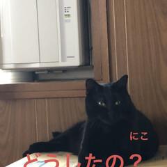 めん/猫/にこ/くろ/黒猫 昨夜明日はリビング掃除しようと決めてたの…(3枚目)