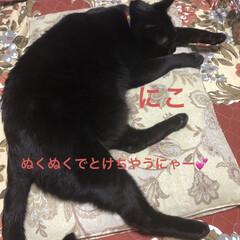 朝ご飯/くろ/にこ/黒猫/めん/猫/... 今朝は少し冷えたかな?朝起きた時は3匹と…(5枚目)
