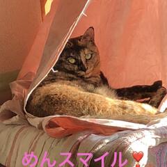 空/朝ご飯/めん/くろ/猫/にこ/... おはようございます。今朝は何だか眠くて1…(7枚目)