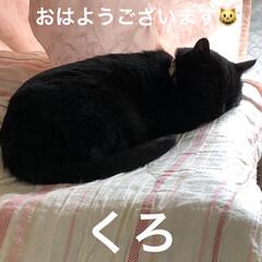 癒し/猫飼のしあわせ/にこ/くろ/黒猫/めん/... おはようございます。 空は曇り空。猫様は…