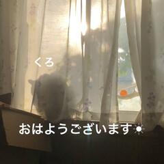 空/めん/猫/にこ/くろ/黒猫 朝からお元気な猫さまたち。お外の警備も怠…(1枚目)