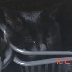 晩ご飯/黒猫/にこ/くろ/猫/めん/... ずーっと旦那さんが食べたがってた焼き肉。…(5枚目)