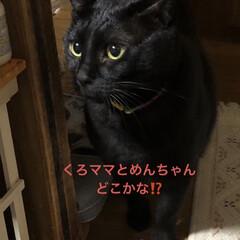 にこ/黒猫/癒し/猫飼いのしあわせ いつも穏やかで優しいにこはすっかりお兄ち…(3枚目)