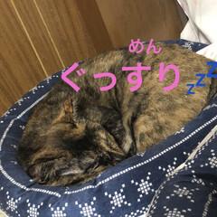 めん/猫/にこ/くろ/黒猫 こんばんはです。今日も一日お疲れ様です。…(6枚目)