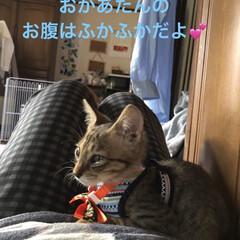 ハロウィン/癒し/猫飼さんのしあわせ/猫/ちび/セリア/... 今日は慣らし保育3時間。 先住猫のくろ、…(3枚目)