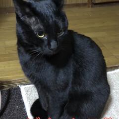 黒猫/にこ にこの特集です。