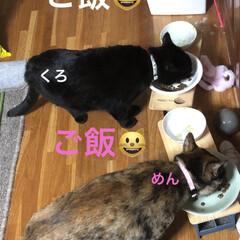 晩ご飯/お昼ご飯/めん/猫/にこ/くろ/... こんばんはです。 今日も一日お疲れ様です…(2枚目)