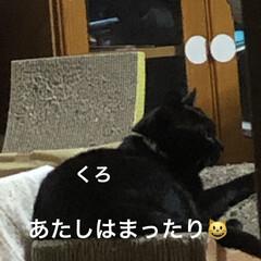 晩ご飯/めん/猫/黒猫/くろ/にこ こんばんはです。今日も一日お疲れ様でした…(4枚目)