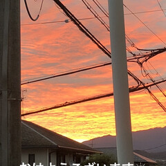 めん/猫/くろ/にこ/黒猫/空 おはようございます 朝焼け綺麗でした❣️…(1枚目)