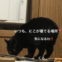 晩ご飯/めん/猫/にこ/くろ/黒猫 こんばんはです。今日も一日お疲れ様です。…(4枚目)