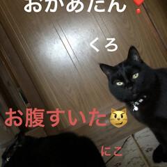 猫飼のしあわせ/癒し/猫/めん/黒猫/にこ/... 今日も一日皆さまお疲れ様です。 冬は鬱気…