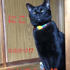 にこ/黒猫/癒し/猫飼のしあわせ/猫 食品の買い足しにバス2駅先までお出かけ。…