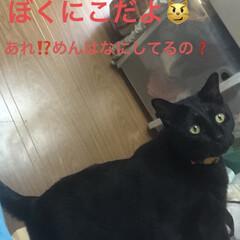 猫飼いのしあわせ/癒し/黒猫/にこ/くろ/猫 今日も一日お疲れ様です。 秋ですねー💕子…