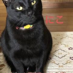 にこ/くろ/黒猫/めん/猫/空 家にたどり着きとりあえずお昼ご飯をかけこ…(3枚目)
