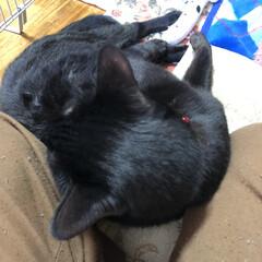 黒猫/にこ にこの特集です。 (7枚目)