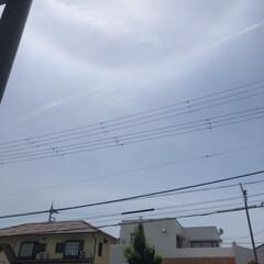 空/お昼ご飯/黒猫/くろ/にこ/猫/... 青空というわけではないけど良いお天気です…(1枚目)