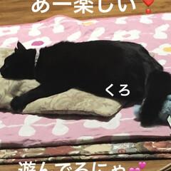 にこ/くろ/黒猫/めん/猫/癒し/... 今日も一日お疲れ様です。めんが今日はご挨…(2枚目)