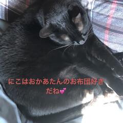空/猫/めん/黒猫/にこ/くろ/... 大変、昨日なんかするの忘れてると思ったら…(4枚目)