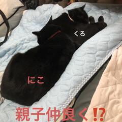 めん/猫/くろ/にこ/黒猫/空 おはようございます 朝焼け綺麗でした❣️…(3枚目)