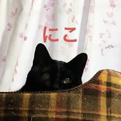 空/猫/めん/黒猫/くろ/にこ おはようございます☀ 今日もさむい朝です…(3枚目)