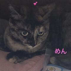 晩ご飯/猫/めん/にこ/くろ/黒猫 こんばんはです。 今日も一日お疲れ様です…(5枚目)