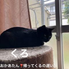 癒し/猫飼のしあわせ/猫/めん/黒猫/にこ/... お家でお留守番してくれてた猫様たちは そ…