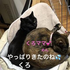 空/猫/猫飼いのしあわせ/くろ/にこ/黒猫/... おはようございます。 良いお天気です。し…(3枚目)