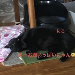 朝ご飯/空/晩ご飯/にこ/くろ/黒猫/... おはようございます☀ 連休明け平常が戻り…(8枚目)
