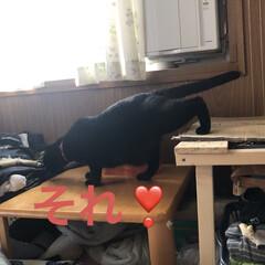 にこ/黒猫/お昼ご飯 お昼ご飯は暑いからぶっかけそうめん。 あ…(4枚目)