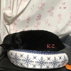 晩ご飯/めん/猫/にこ/くろ/黒猫 こんばんはです。今日も一日お疲れ様です。…(3枚目)