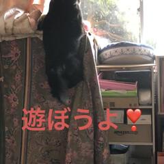 空/マスク/お花/くろ/にこ/黒猫/... おはようございます。今朝はまだ曇ってまし…(9枚目)