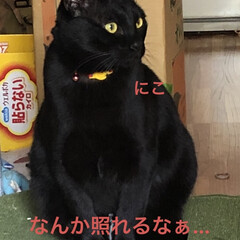 癒し/猫飼のしあわせ/にこ/黒猫 朝から旦那さんがコンロの設置をしてくれて…(2枚目)