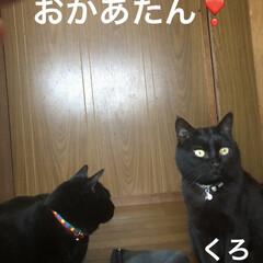 晩ご飯/猫/めん/にこ/くろ/黒猫 こんばんはです。 今日も一日お疲れ様です…(3枚目)
