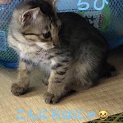 里親さん募集/保護猫/ちび/猫飼のしあわせ/癒し/猫 こんにちは😊ちびの里親募集のチラシを持っ…
