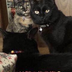 猫飼のしあわせ/癒し/にこ/めん/猫/黒猫/... 今日はいつになく、くろが活発❣️とっても…