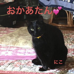 空/お昼ご飯/黒猫/くろ/にこ/猫/... 青空というわけではないけど良いお天気です…(3枚目)