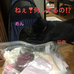 晩ご飯/猫のいる暮らし/猫とインテリア/にゃんこ同好会/LIMIAペット同好会/ねこと暮らすお部屋/... 今日も一日お疲れ様です。晩ご飯何にしよう…(5枚目)