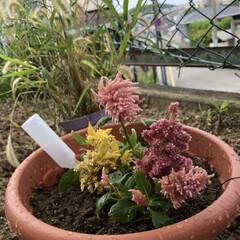 花のある暮らし この頃お花たちを載せてなくて。と言うか …